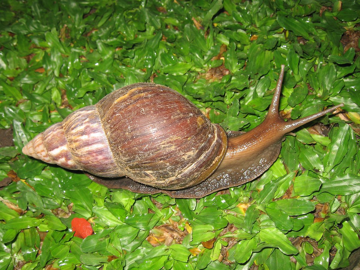snail farm product